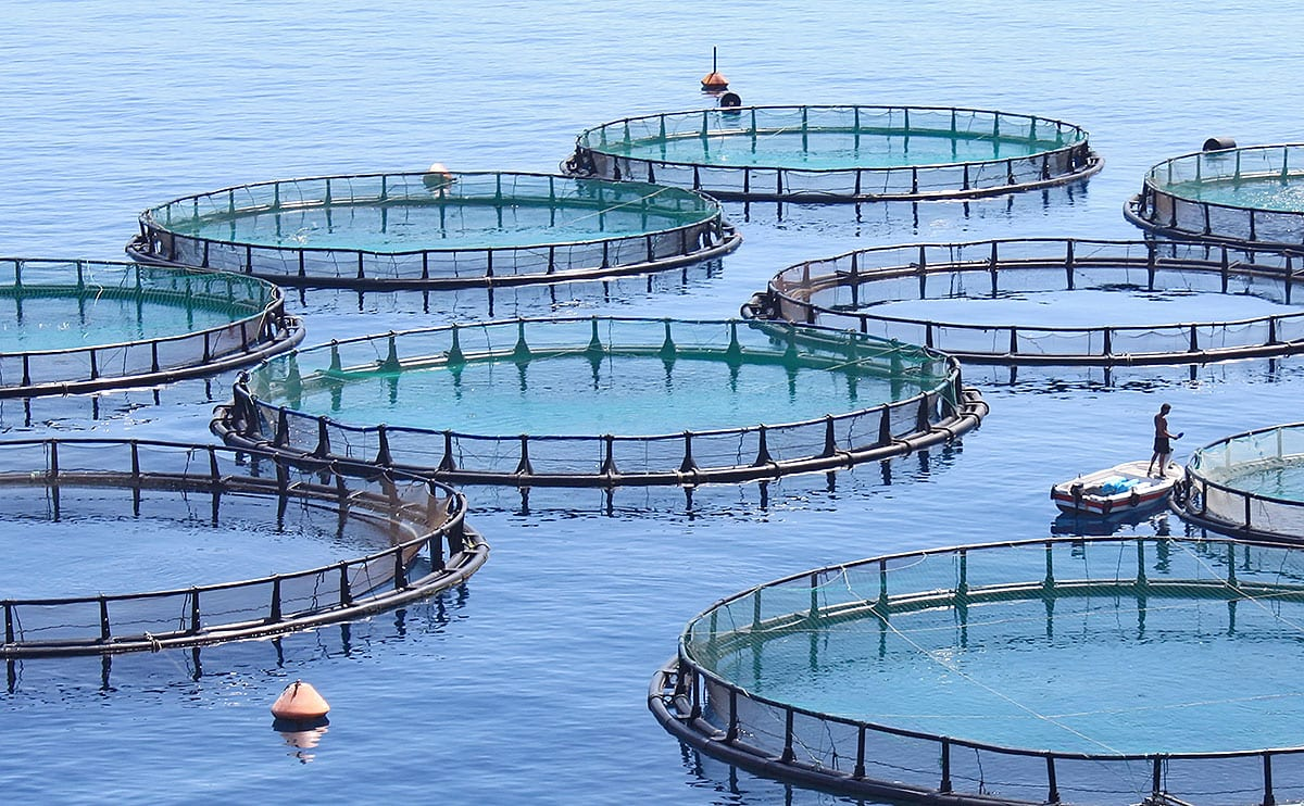Galway-led fish farming project to improve efficiency