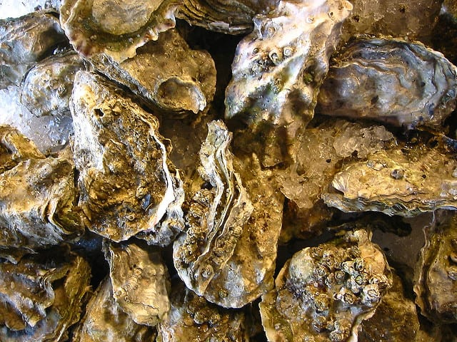 Oysterman caught harvesting illegal shellfish