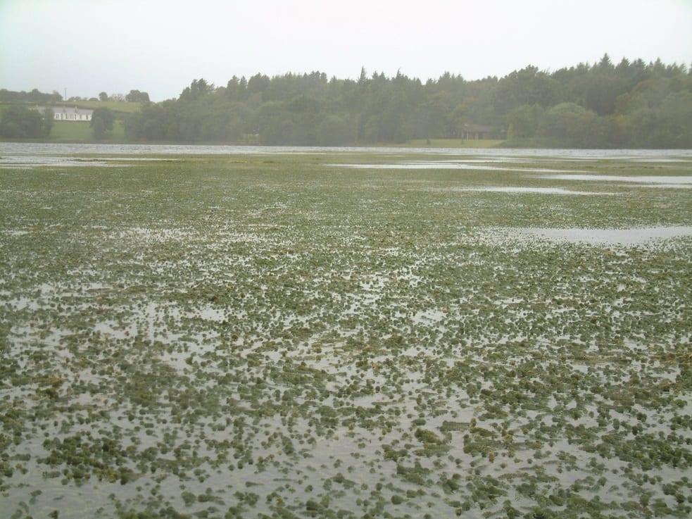 Works to remove invasive waterweed from Lough Corrib will return next year
