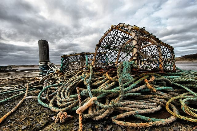 Lobster pot thief lands in hot water